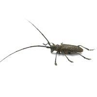 Supprimmez termites et capricornes de vos bois à Nîmes