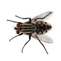 Des mouches dans la cuisine à Nîmes ? PHA-Sud est la solution !