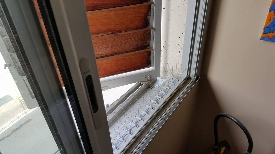 Pics anti oiseaux sur rebord de fenêtre